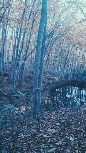 雪の中の森